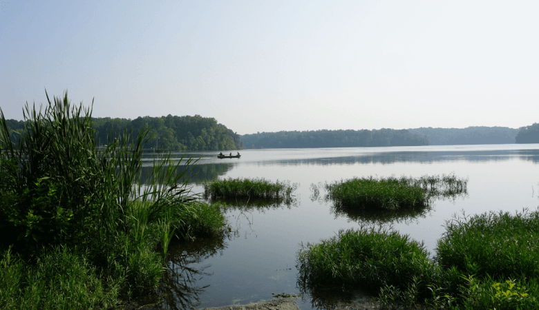 lake with patches of grass
