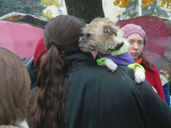В Харькове митинговали за права животных 5