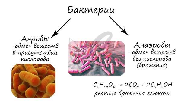 Em média, a cada 20 minutos ocorre, a população de bactérias cresce em progressão geométrica.
