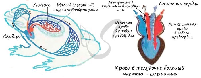 Су асты субъектілеріне басшының астыңғы жағындағы арнайы аппарат;