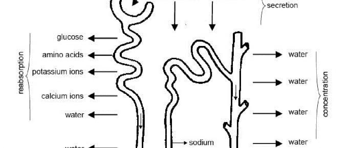 NCERT class 10 Science chapter 6 life processes solution