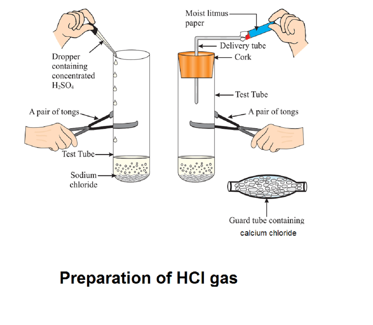 hight resolution of activity 2 9 class 10 science explanation