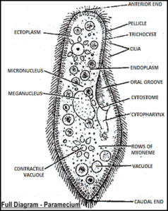 AS Level Biology (9700) P3 Guide – Diagrams
