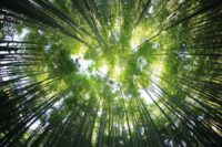 The Student Affairs Collective Breaking the Bamboo Ceiling