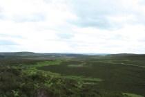 Hepburn Moor