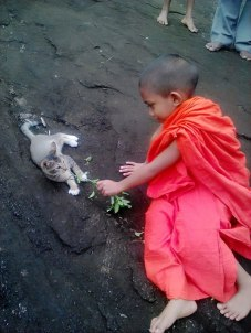 sarana cat and sidu