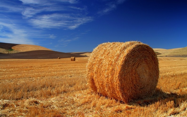 Get Involved: Hay and Hampers for Hope