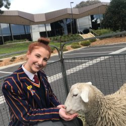 Peninsula Grammar Invites Melbourne Mobile Farm to Help With Exams