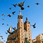 Краковские голуби