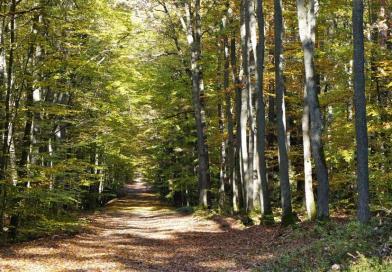 Лагувский природный парк