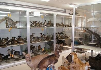 Музей природоведения национального парка Карконоше
