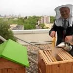 Новые тенденции: городское пчеловодство Варшавы