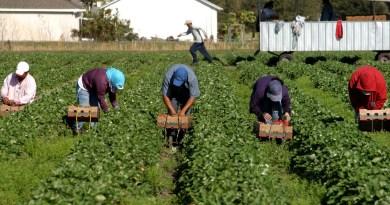 Работа в сельском хозяйстве Польши — какие преимущества и как найти хорошее место