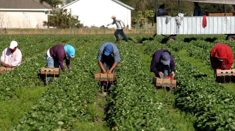 Работа в сельском хозяйстве Польши