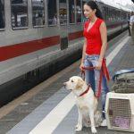 Переезд в Польшу с собакой