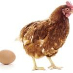 Польша покупает куриные яйца в Украине