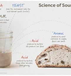 sourdough for science [ 1220 x 831 Pixel ]