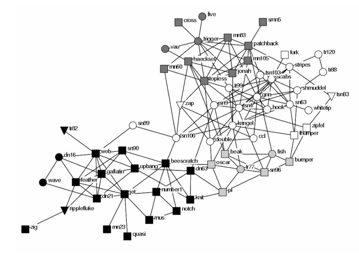 Mapping the social structure of dolphins using Gephi