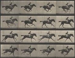 A 12 frame time-series photograph of a horse taken by Eadweard Muybridge