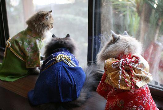 gatti in kimono