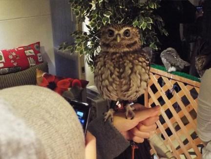 owls-11