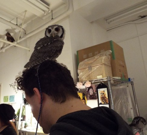 owls-41