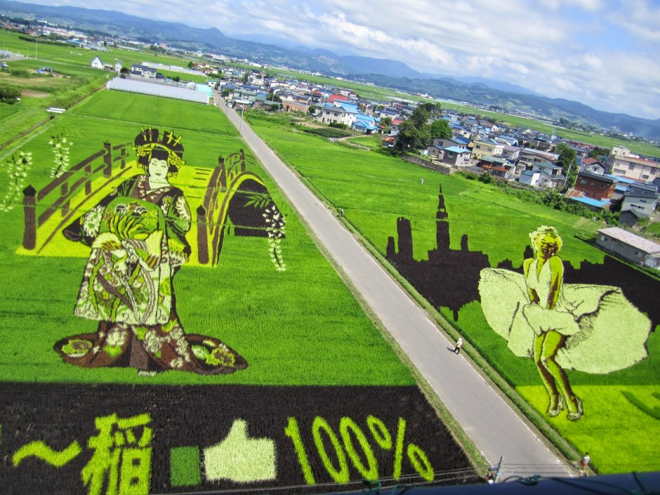 risposta giapponese ai cerchi nel grano pivelli la Tanbo art arte con i campi di riso (12)