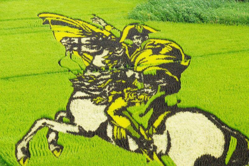 risposta giapponese ai cerchi nel grano pivelli la Tanbo art arte con i campi di riso (8)