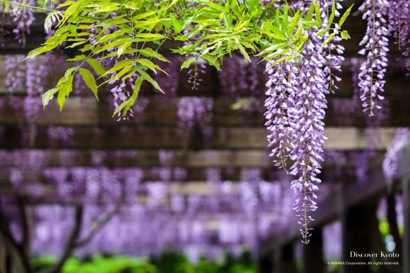 3 cose che nessuno sa sulla soia fuji