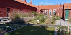 Dans les jardins de la Cité des Electriciens à Bruay-la-Buissière (62). Photo perso de 2019.
