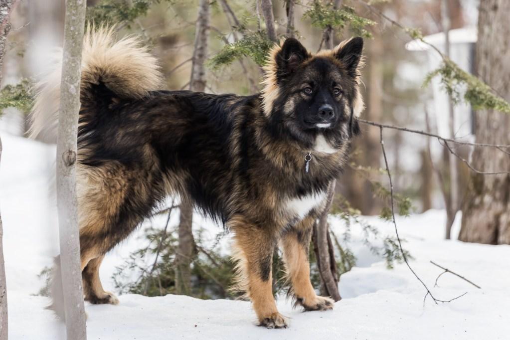 photo d'un chien qui prend la pose dans la neige