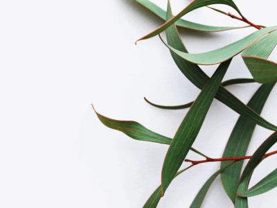 cadeaux_trophées_marque_unique_creative_valeurs_personnalité_vegetal_plant