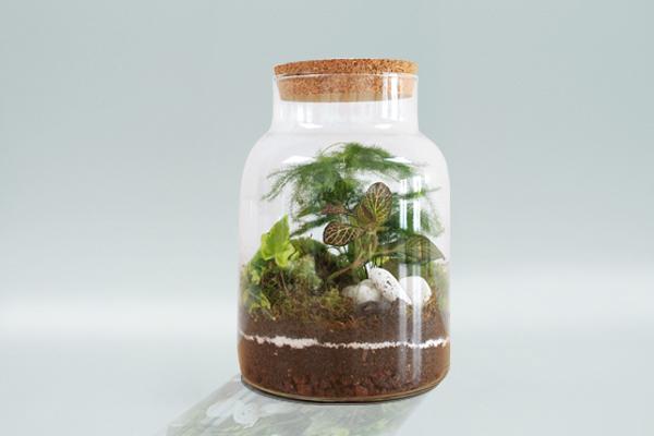 Trophée sur mesure, terrarium, bocal avec végétation et bouchon en liège, jungle, studio l'ingrédient