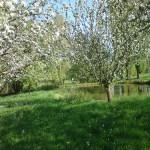 Le jardin au printemps - Studio résidentiel La Boite à Meuh