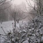 Le jardin sous la neige - Studio résidentiel La Boite à Meuh