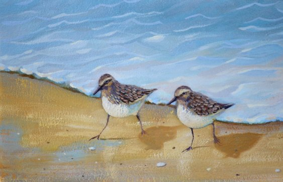 oil painting for sale of sandpiper birds