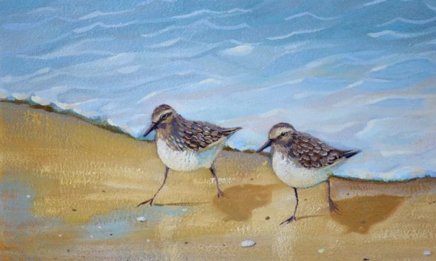 Sandpiper Birds Just About Finished