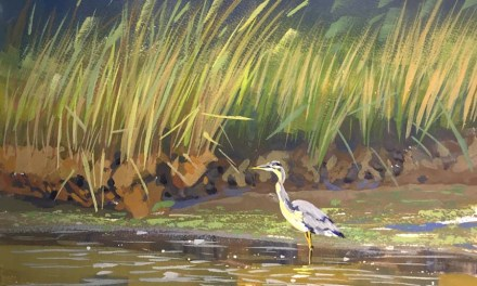 Great Blue Heron at Salt Marsh