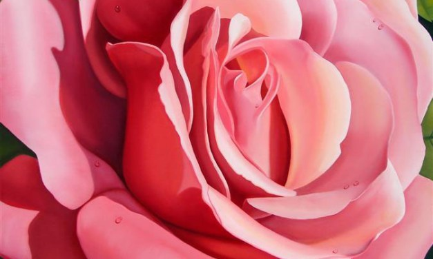Pink Rose Offered in Choice of Frame