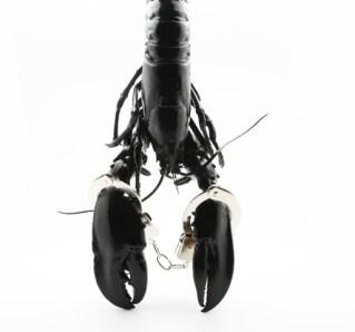#dianagran #photo #photograph #lobster #studio57 #studio57gallery #picture #photograph #galerie #paris #art