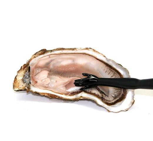 #oyster #studio57 #studio57gallery