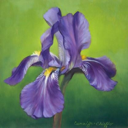 """Iris in Bloom, oil on copper, 8"""" x 8"""""""