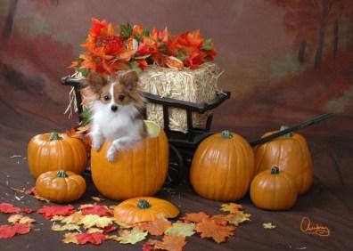 Fae in Pumpkin