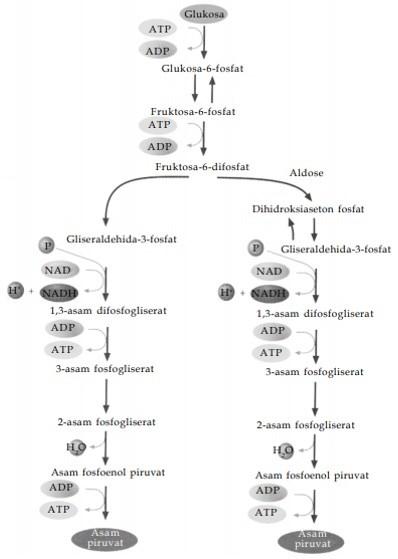 Proses Katabolisme Karbohidrat : proses, katabolisme, karbohidrat, Metabolisme, Katabolisme,, Anabolisme,, Pengertian,, Proses,