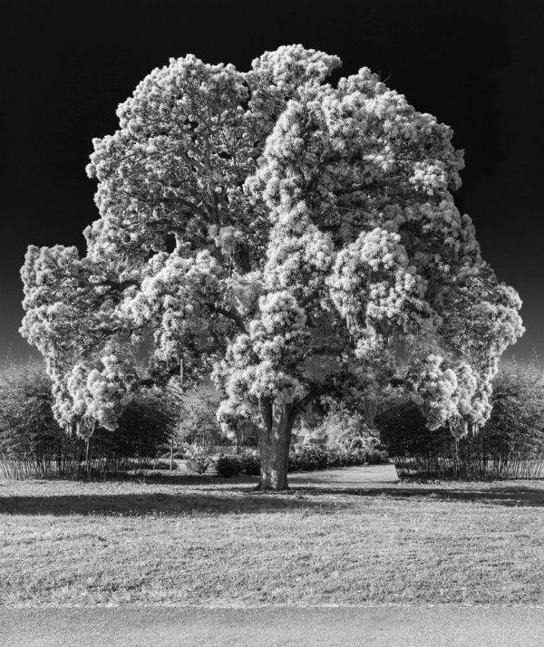 Botanical Gardens 4 by Dan Kaufman, Studio Kaufman