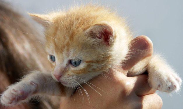 Instructions for Kittens