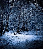 Bench of Winter Wonderland. Gilderic Photography
