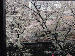 140403-sakura.jpg