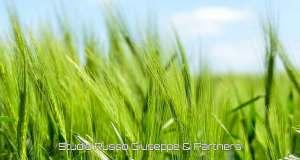 Esonero-contributivo-per-coltivatori-diretti-e-imprenditori-agricoli-professionali-studiorussogiuseppe