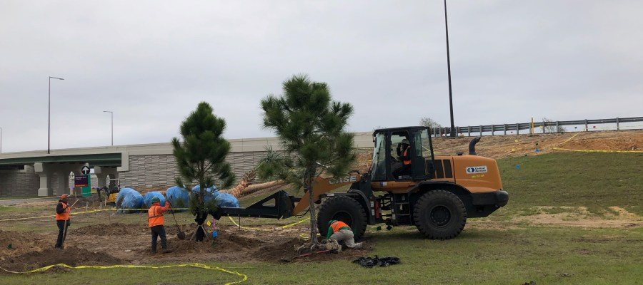 Crews continue additional tree planting to beautify the guest vehicle approach ramp to the parking ticket booths. Stay connected to Hollywood Studios HQ for all Park news. Disney's Hollywood Studios. Photo by John Capos